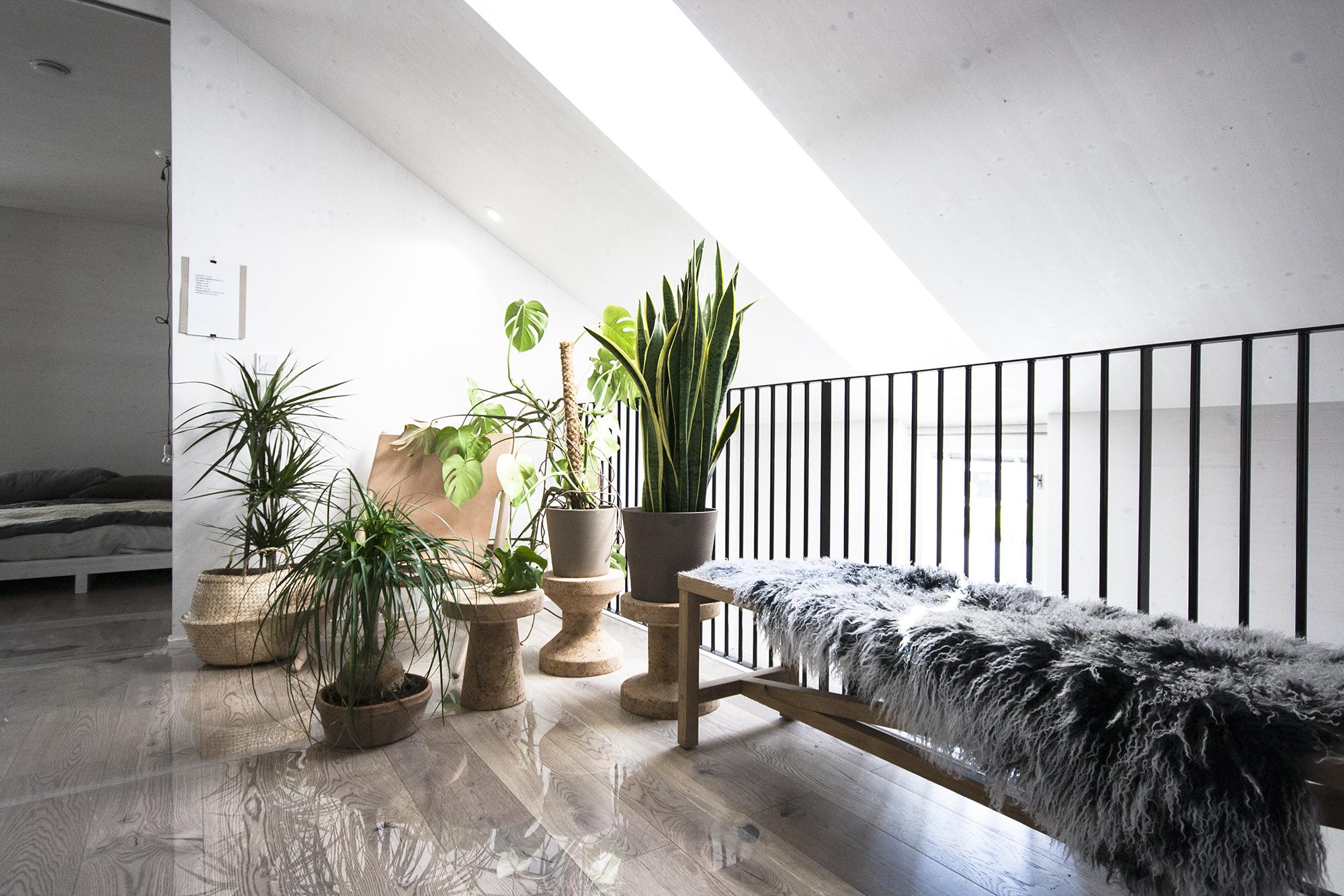 asuntomessut vivola viherkasvit