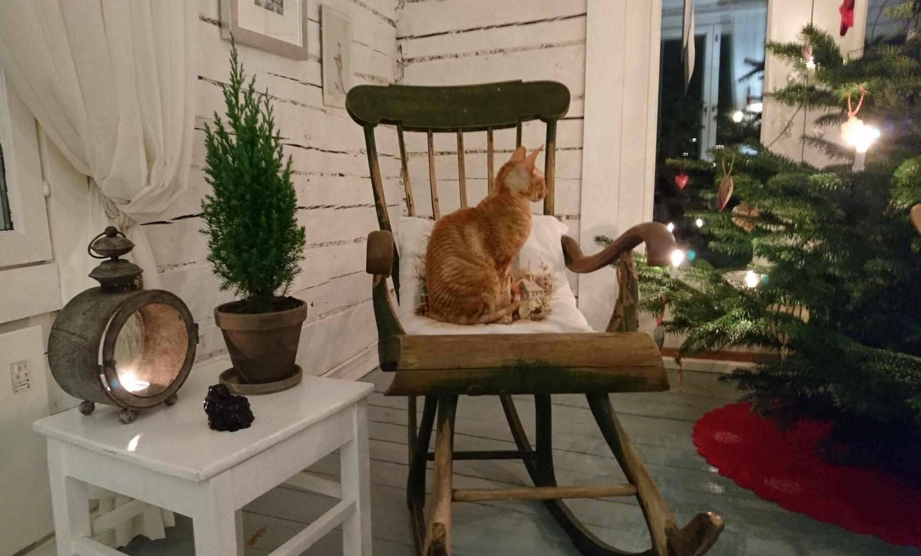 joulukissa