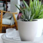 Hortonomin 4 vinkkiä kodin viherkasvien hoitoon