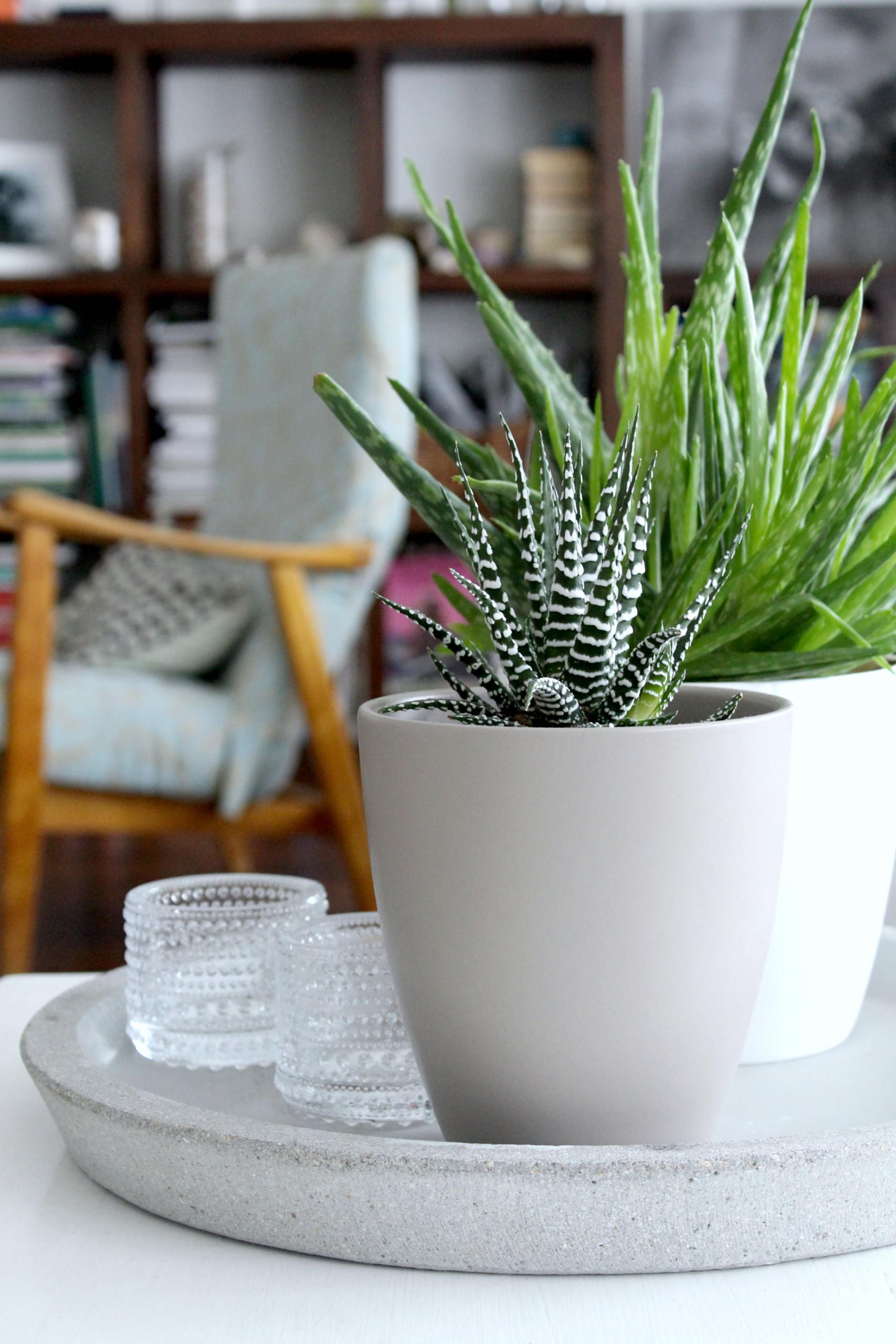 viherkasvien hoito: valitse kasvupaikka oikein
