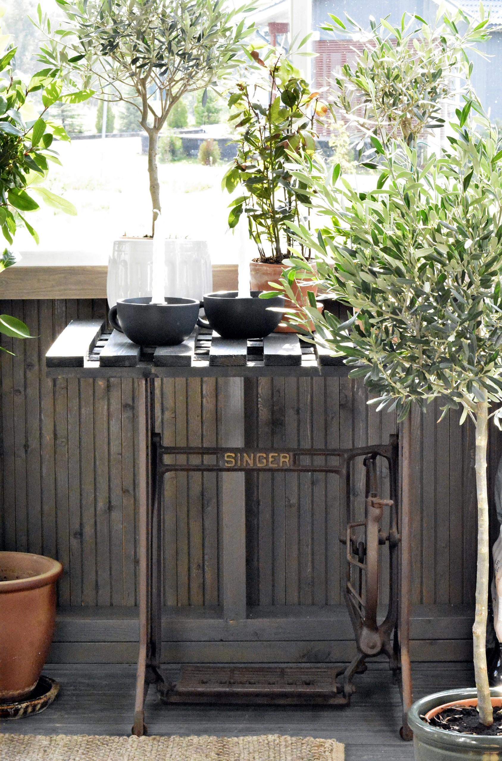 viherkasvit verannalla