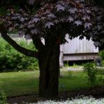 Pihan puut – arvokas lisä vai uhka kiinteistölle?
