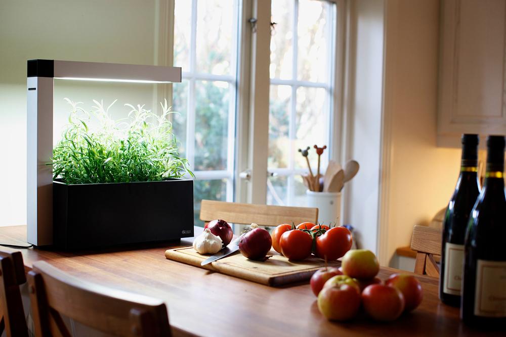 indoor garden, herbie, tregren