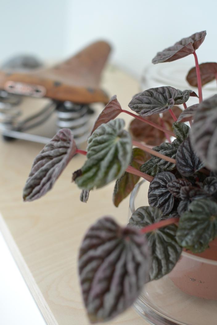 Vihrerkasvit työhuoneessa