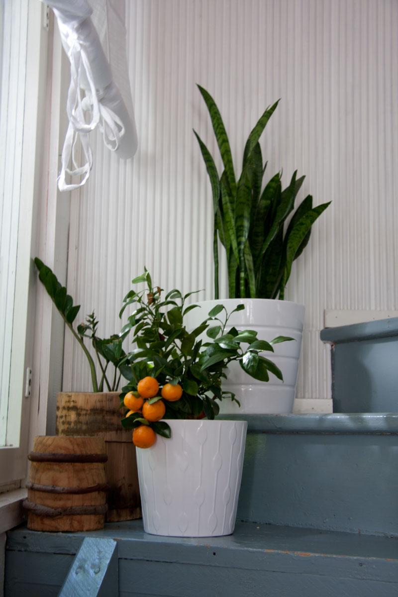 Kasvit portaikossa